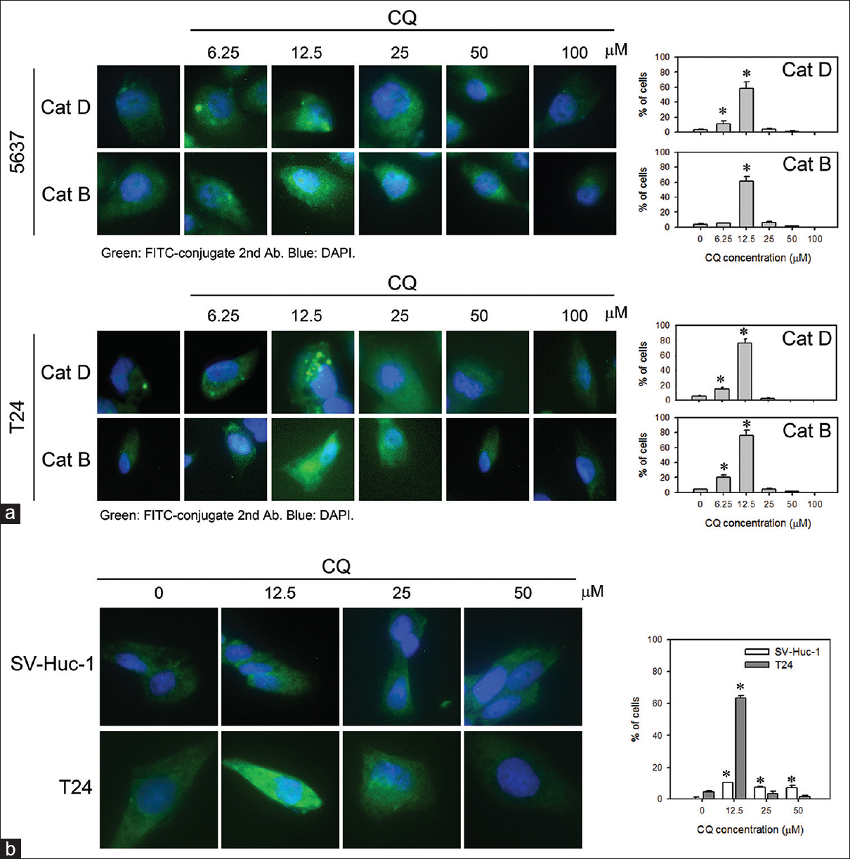 Chloroquine induces lysosomal membrane permeability-mediated